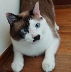 完全室内飼いの猫レオと難病飼い主の日常